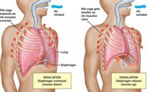 diaphragm-breathing-500x313